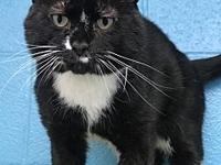 Thomas's story Please contact Cat