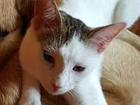 Thomas's story THOMAS is a 1 year old male kitten with
