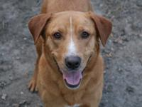 ***must have a fenced yard to adopt***  River and