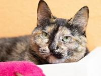 My story Thomasita is an adult, spayed female cat,