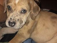 Thor's story Thor is an 8 week old mixed breed rescued