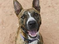Thor is a strikingly handsome boy with a full-body wag.