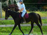 Thoroughbred - Cora - Medium - Adult - Female - Horse