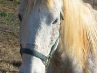 Thoroughbred - Lady Freckles - Large - Adult - Female -