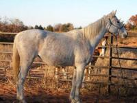 Thoroughbred - Madge - Medium - Adult - Female - Horse