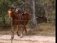 Beautiful 4 year old thoroughbred mare for sale. She is