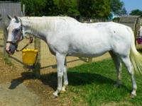 Thoroughbred - Maura - Large - Senior - Female - Horse