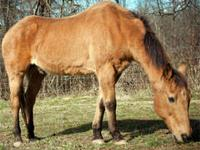 Thoroughbred - Orion - Extra Large - Adult - Male -