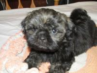 I have three male and two female shih tzu puppies that