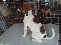 Three Spots's story This girl will be spayed 11/12 and