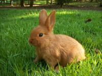 www.FisherFarmsRabbitry.com We have Thrianta bunnies