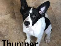 Thumper's story Meet Thumper, he's a five month old