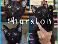 Thurston's story He is very playful and sweet. He was
