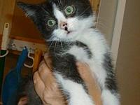 Thurston's story These 8 kittens were rescued from the