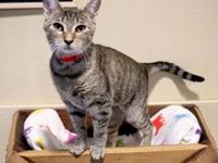 My story Come visit me at the Orlando Cat Cafe! I'm a
