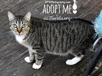 Tia's story You can fill out an adoption application