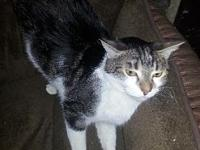 Tia's story Tia is a 7 year old female short