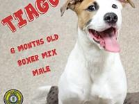 Tiago's story You can fill out an adoption application