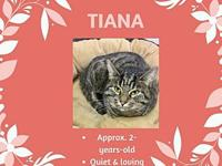 Tiana's story Meet Tiana! This gorgeous 2-year-old girl