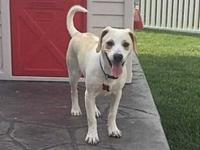Tiana's story Meet Tiana! She is currently in a foster
