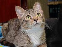 Tibby's story Description: quite a small tabby kitty