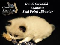 I have 2 males and 1 female purebred bicolor kittens.