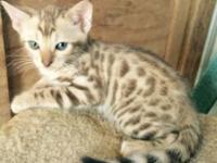 I have 2 really nice Bengal kittens that will be ready