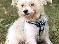 Tidbit's story This little guy was surrendered to our