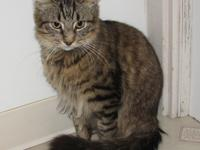 Say hello to Tidus a DMH brown tabby male cat. He is a