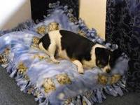 I make Tied fleece dog beds for any size dog or kitty.