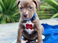 Available 4/15/18 - Tiffany is an outgoing pit mix who
