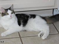 Tiger - Andrea - Medium - Young - Female - Cat Andrea