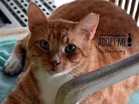 Tiger's story You can fill out an adoption application