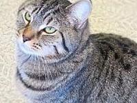 Tiger's story Tiger has been at the shelter for over a