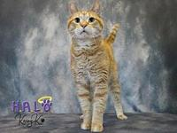 Tiger's story * Lovable & Charming * Loves to play with