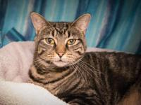 Tiger Lilly is a sweet shy girl looking for a quiet