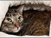 TIGER LILY's story $97.50 FEE INCLUDES: