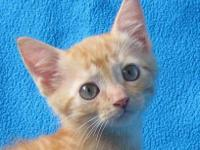 Tiger - Mike - Medium - Baby - Male - Cat Hi, my name