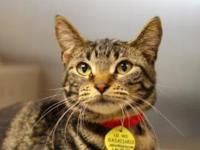 Tiger - PetSmart Kenosha!'s story Come meet this