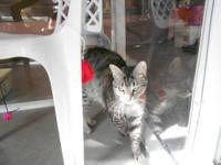 Tiger - Reilly - Small - Young - Female - Cat Reilly is