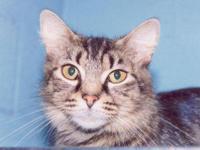 Tiger - Zelda - Medium - Senior - Female - Cat Zelda,
