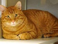My story Tiger is a dark red tabby with an estimated
