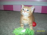 TIGGER--adoption pending's story **TIGGER IS BEING