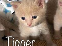 Tigger's story Please fill out our adoption application