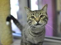 Tigger's story I am a very rambunctious young man who