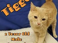 Tigger's story You can fill out an adoption application