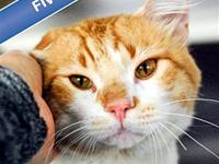 Tigger's story Tigger is a sweetie who loves having his