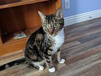 Tigger's story Tigger is a 7 year old, neutered male,