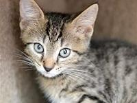 Tigger's story Kitten season this year started with a