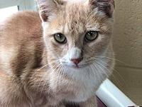 Tigger's story Tigger's adoption fee of $80 covers the